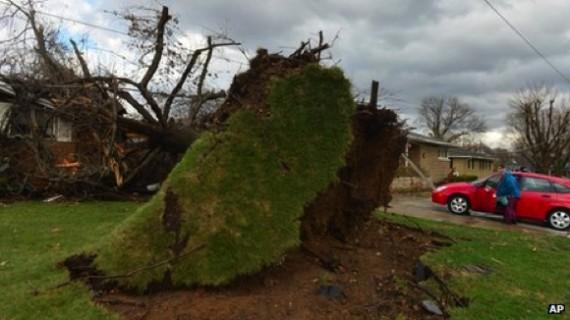 Un certain nombre d'arbres ont été déracinés, et des lignes électriques dommageables