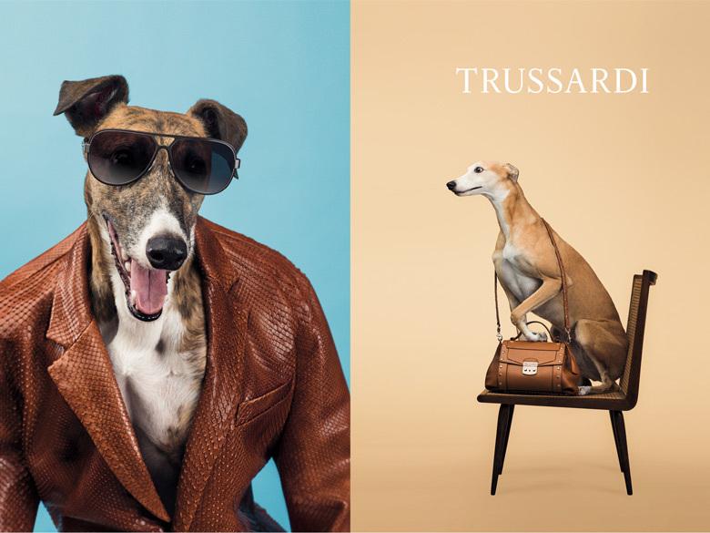 Des chiens posent pour Trussardi