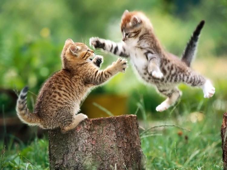 Un italien adopte 15 chats pour les manger ibuzz365 - Bruit qui attire les chats ...