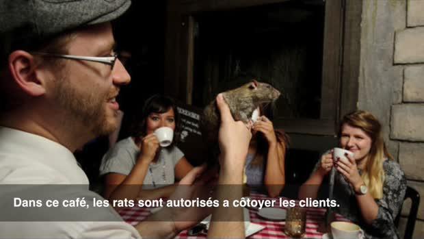 Boire son café en compagnie de rats