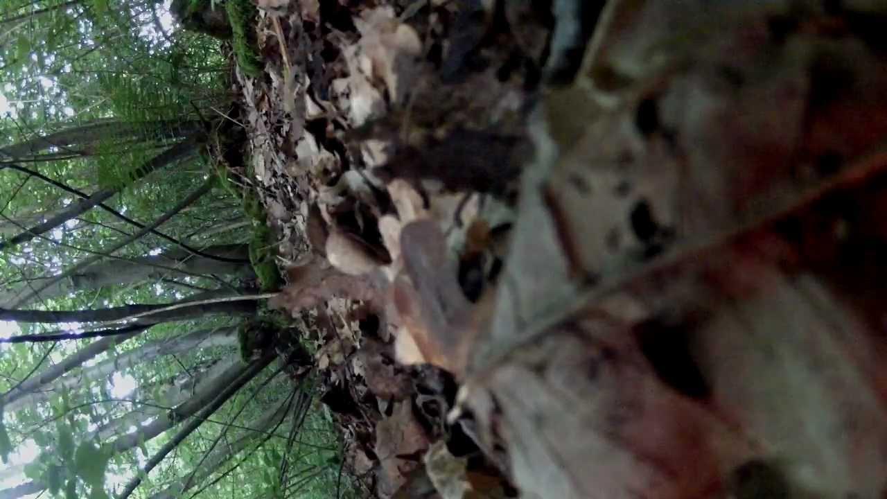 un renard fait joujou avec une caméra comme un chien avec son jouet
