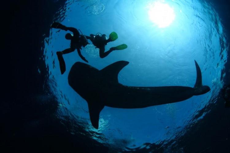 Philippines : une tête humaine retrouvée dans le ventre d'un requin