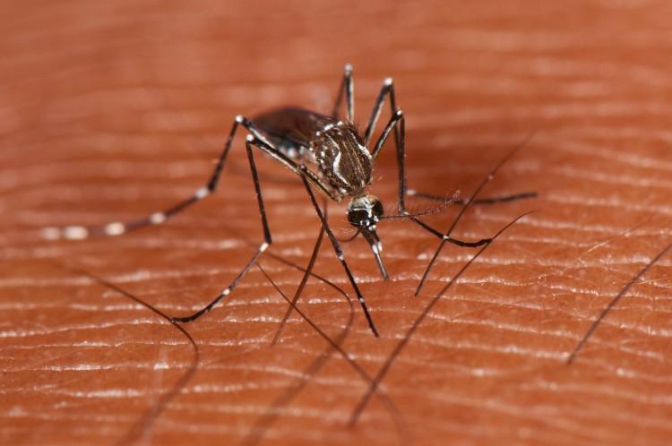 Découverte d'une nouvelle classe d'anticorps naturels contre la dengue