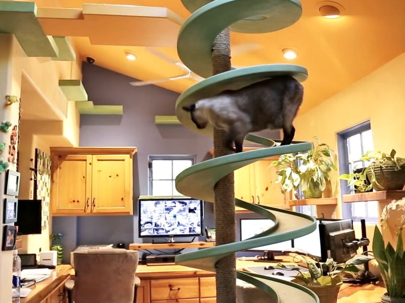 Un dépense une folle somme pour un espace de jeu pour chats