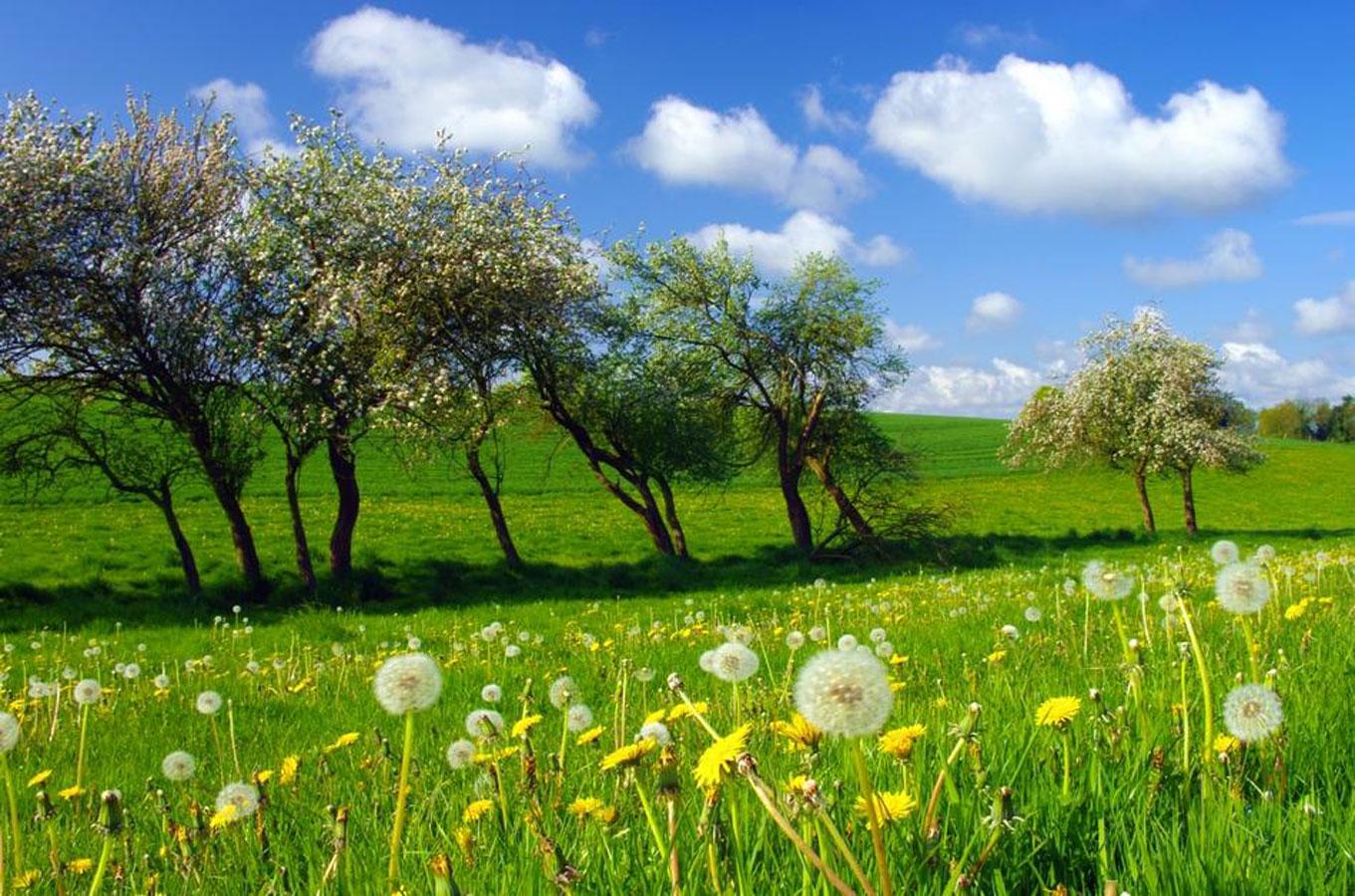 Le printemps et ses petits soucis